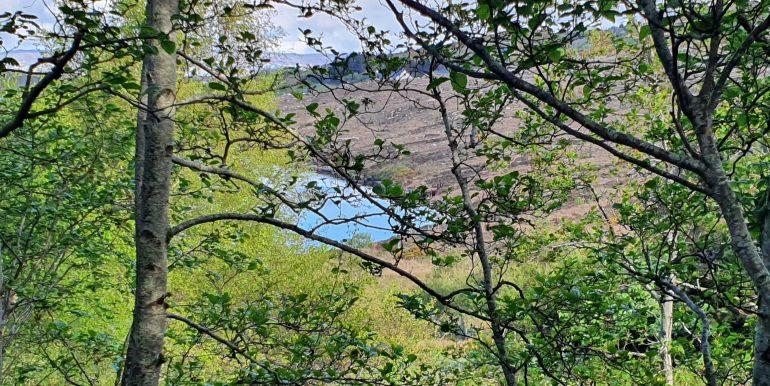 Joe Joyce -A-trhu the trees to lake May 2021